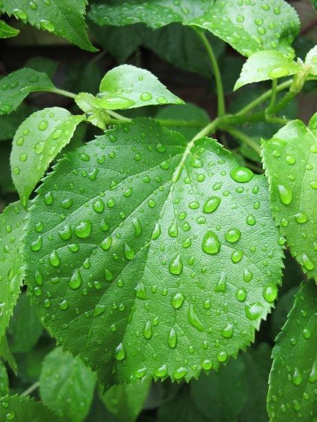 pec lietus