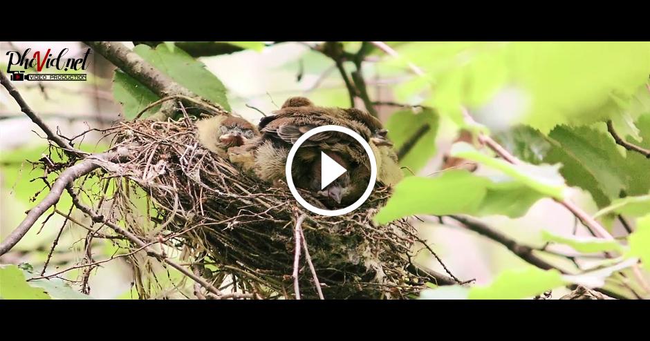Nesen izšķīlušies putniņi 08.07.2017